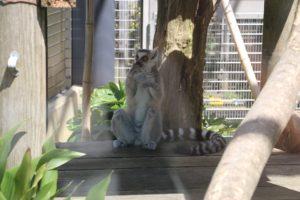 京都市動物園京都市動物園